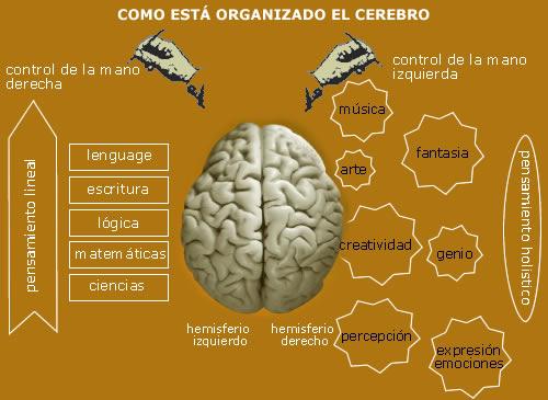 Haiki-en-busca-del-yo-real-Un cerebro