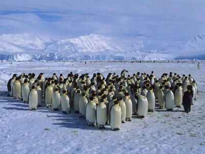 pinguinos-haiki