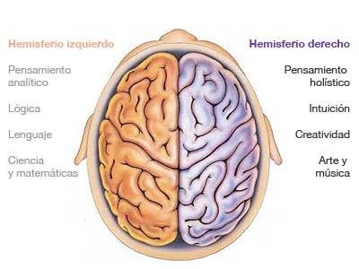hemisferio-cerebral-cerebro-haiki