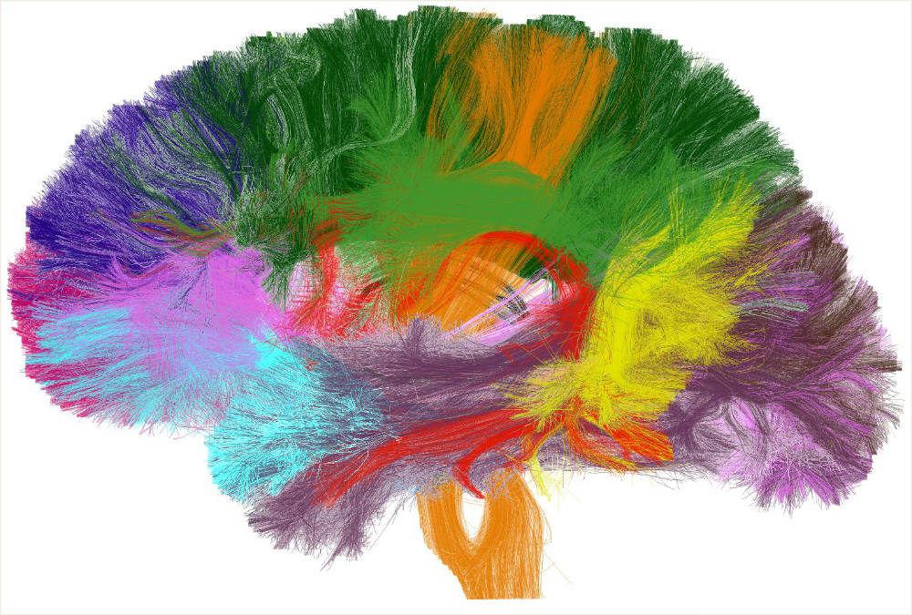 -haiki-en-busca-del-yo-real-blog- Psiconeuroinmunología